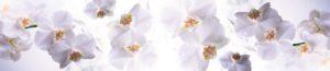 FM 16 Малые орхидеи