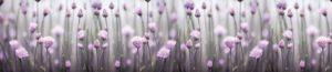 FM 17 Сиреневые цветы
