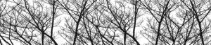 FM 24 Зимние деревья