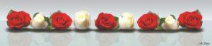 SP 030 Красные и белые розы