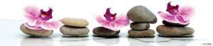SP 034 Орхидеи на серых камнях