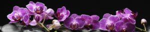 SP 089 Фиолетовая орхидея на черном