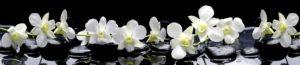 SP 091 Ветка орхидеи на черном