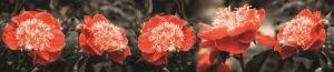 SP 114 Красные цветы
