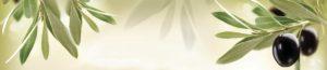 SP 154 Ветка оливы
